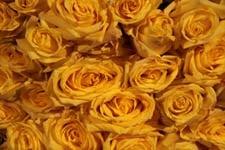 Image: Graduation roses